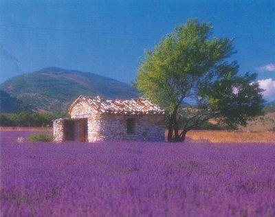 Provence 2.jpg