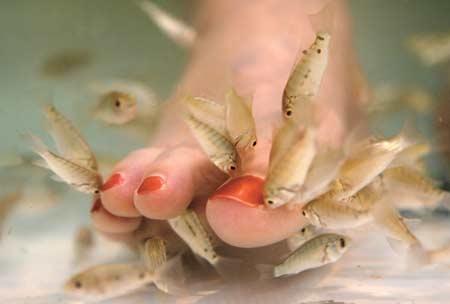 simon leys,l'ange et le cachalot,le bonheur des petits poissons,le studio de l'inutilité